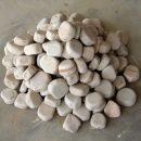 Dholpur Beige Pebbles
